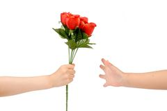 Handover red rose Royalty Free Stock Image