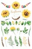 Handpainted солнцецветы акварели яркое clipart акварели 31 солнцецветов, листьев, ветвей, пер, рожков оленей Стоковые Изображения RF