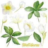Handpainted цветки акварели установленные в винтажный стиль Оно ` s совершенное для поздравительных открыток, приглашения свадьбы иллюстрация штока