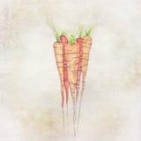 Handpainted carrots Royalty Free Stock Photo