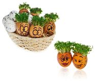 Handpainted Easter eggs in funny scared and surprised cartoonish faces in the basket with cress like hair look at the outstanding royalty free stock photography
