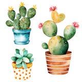 Handpainted kaktusväxt för vattenfärg och suckulent växt i kruka Royaltyfri Bild