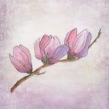Handpainted magnolia blossom Royalty Free Stock Photo