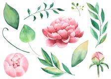 Handpainted vattenfärgpions, blommor, sidor, filialer, lövverk royaltyfri illustrationer