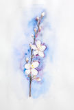 handpainted watercolor blooming apricot tree brunch Royalty Free Stock Images