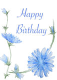 Handpainted watercolor Chicory flowers card Stock Photos