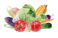 Handpainted watercolor clipart with fresh vegetables Royalty Free Stock Photography