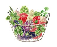Handpainted watercolor clipart with fresh vegetables in box Royalty Free Stock Images