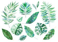 Handpainted watercolor floral elements.Watercolor leaves, branches. Tropical Leafy collection. Handpainted watercolor floral elements.Watercolor leaves, branches royalty free illustration