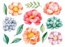Handpainted watercolor peonies, flowers, succulents,branch and leaves. 14 lovely clipart isolated.Can be used for your project,greeting cards,wedding,Birthday vector illustration