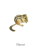 Handpainted watercolor poster with chipmunk Royalty Free Stock Photo
