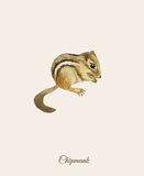 Handpainted watercolor poster with chipmunk Stock Images