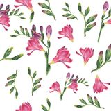 Handpainted watercolor seamless pattern with botanical watercolor illustration of freesia on white background royalty free illustration