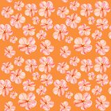 Handpainted watercolor seamless pattern with pink mallow flowers Abutilon on orange background royalty free illustration