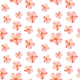 Handpainted Watercolor Seamless Pattern With Red Mallow Flowers Abutilon On White Background Stock Image