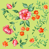 Handpainted watercolor vector flowers and leaves set Stock Image