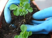 Handpflanzen kleine Anlagen Lizenzfreie Stockfotografie