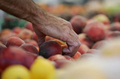 Handpicked. Man's hand choosing a peach among fresh fruit at market Royalty Free Stock Images