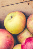 Handpicked jabłka Zdjęcia Royalty Free