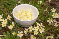 Handpicked primrose flowers used as salad decoration stock photos
