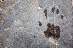 Handprint Στοκ Εικόνες