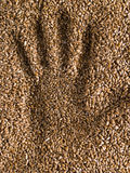 Handprint wheat Royalty Free Stock Image