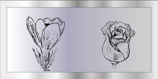 Handrawn rosa dell'ibrido e del croco su fondo grigio Fotografie Stock Libere da Diritti