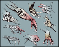Hands. Drawing of human hands. Additional  format Illustrator 8 eps Royalty Free Stock Images