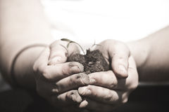 Hands. Holding soil and new plants Royalty Free Stock Photo
