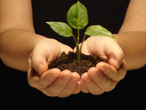 Hands. Holding sapling in soil Royalty Free Stock Photo