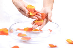 Hands. Rose petals and an transparent bowl Stock Images