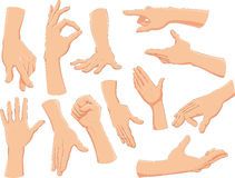 Hands. Objects isolated - vector and realistic illustration Royalty Free Stock Image