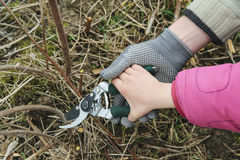 Hands Adult And Child Holding Secateurs Royalty Free Stock Photos