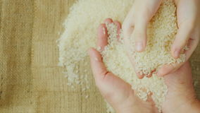 Hands adult woman holding a grain of rice, over them as children`s hands holding rice