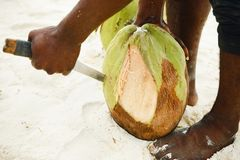 Hands African man peels coconut on the beach. Close up Royalty Free Stock Images
