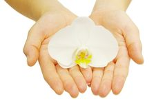 Hands And Orchid Royalty Free Stock Images