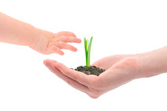 Hands And Sprout Stock Photography