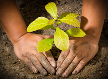 Hands And Tree Ground Plant Royalty Free Stock Image