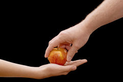 Hands & Apple. An isolated over black image of a young caucasian boy and a caucasian man's hand giving and receiving a juicy ripe apple royalty free stock images