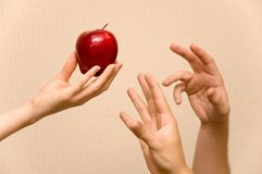 Hands and apple royalty free stock image