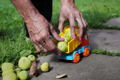 Hands With Apples Stock Photo