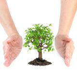Hands around small tree Stock Photography