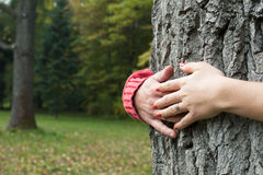 Hands around tree Royalty Free Stock Photography