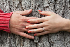 Hands around the tree Stock Photography