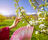 Hands of Asian woman and blossom tree Stock Photography