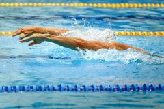 Hands athlete swimmer. Swimming butterfly stroke in pool competition Stock Photography