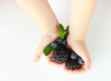 Hands with berries Stock Image