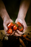 Hands with biological vegetables. Hands with biological tomatoes and carrots Royalty Free Stock Photography