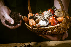 Hands with biological vegetables. Carrots, tomatoes,onions,potatoes Royalty Free Stock Images