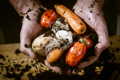Hands with a biological vegetables Stock Images